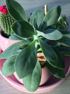 Vetplant verzorgen #SimpleThoughts