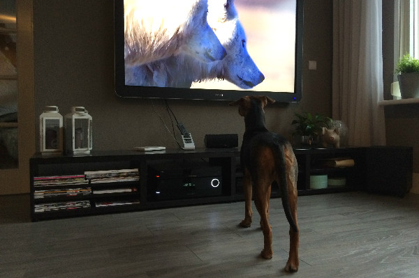 simple thoughts candys avonturen candy hond tv kijken