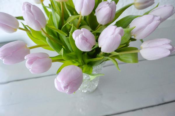 simple thoughts nooit meer hangende tulpen bos