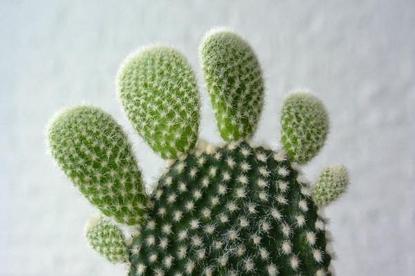 simple thoughts simpele planten cactus makkelijke plant