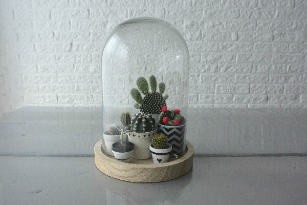 simple thoughts simpele planten cactus verzorgen stolp
