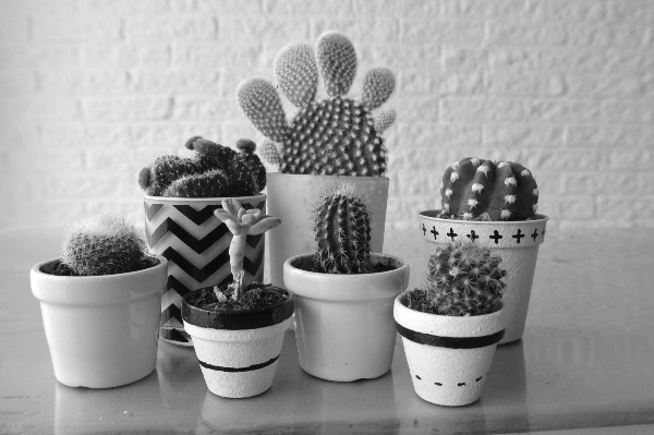 simple thoughts simpele planten cactussen