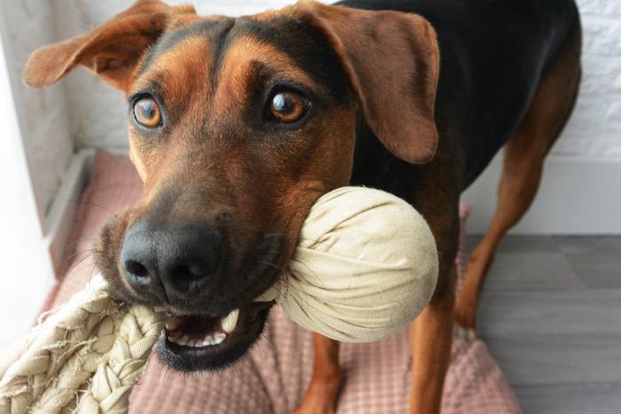 simple-thoughts-diy-hond-zelfgemaakt-hondenspeeltje