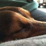 simple-thoughts-candy-hond-bijnamen