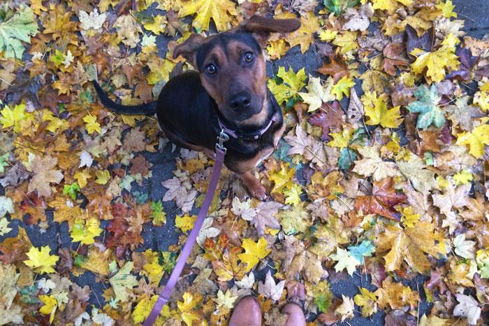 simple-thoughts-favoriete-seizoen-herfst-blaadjes