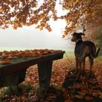 simple-thoughts-favoriete-seizoen-herfst-candy