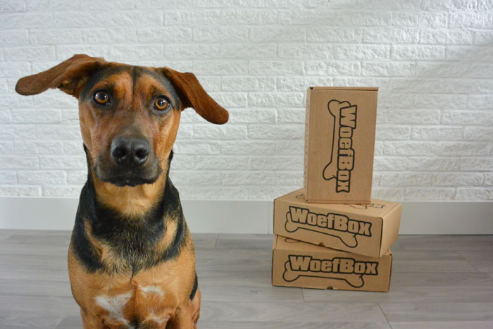 simple-thoughts-woefblog-september-woefbox-candy-unboxing-review