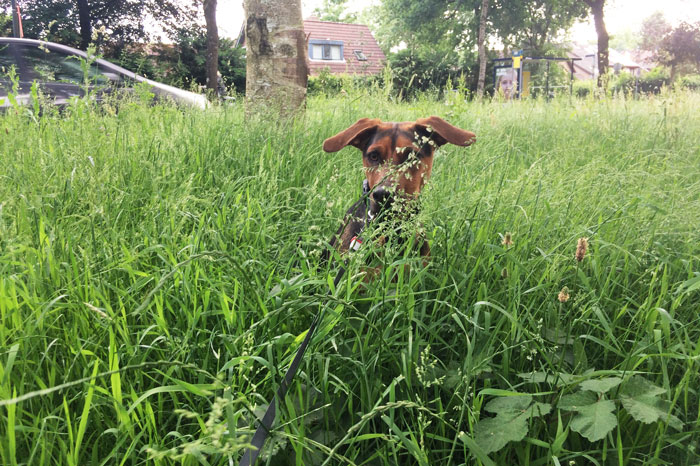 simple-thoughts-hond-aankijken-tijdens-poepen
