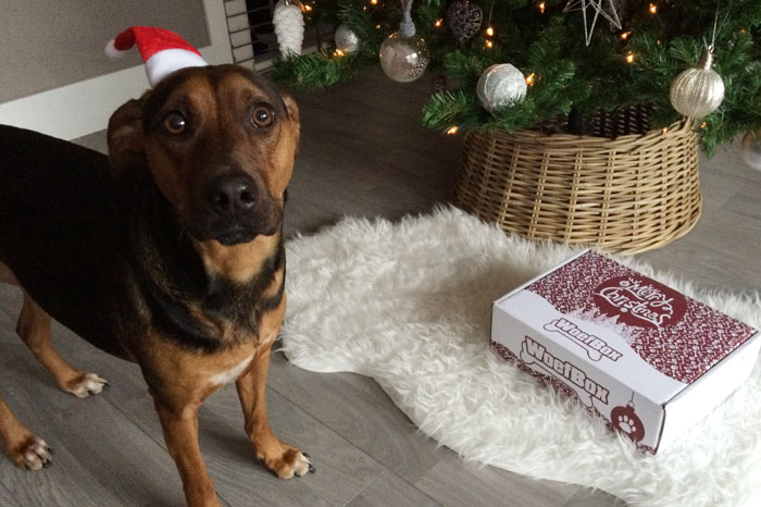 simple-thoughts-kerst-woefbox-fotoshoot-achter-de-schermen-woefeltje-kerst