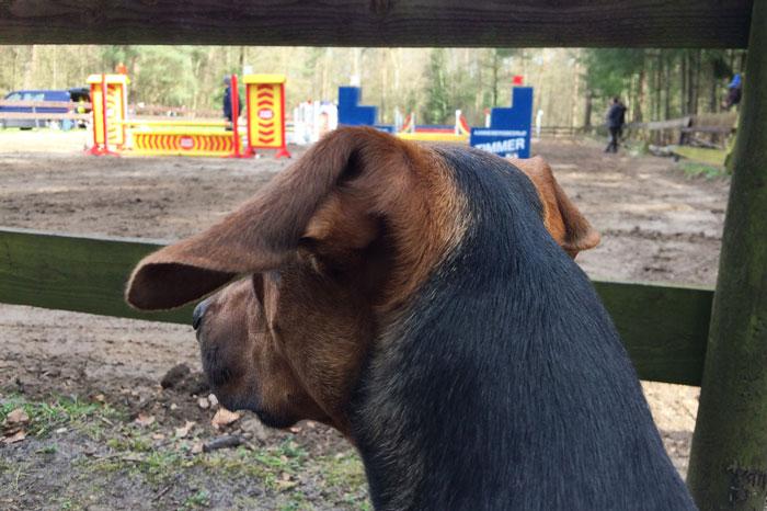 simple-thoughts-candy-jarig-2-jaar-hond-paard