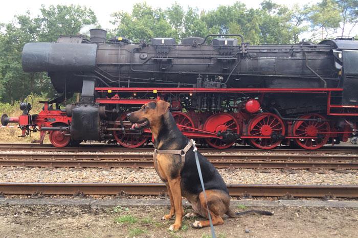 simple-thoughts-candy-jarig-2-jaar-hond-trein