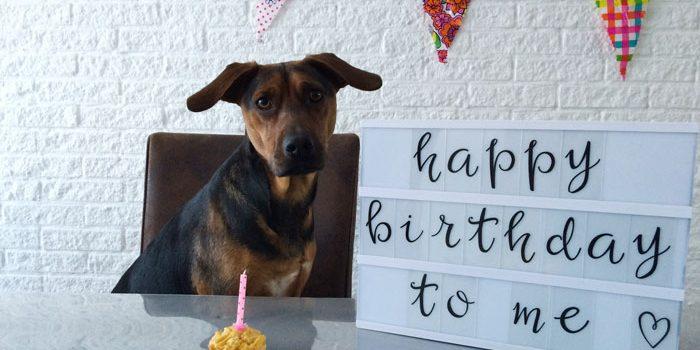 simple-thoughts-candy-jarig-verjaardag-hond-pawty